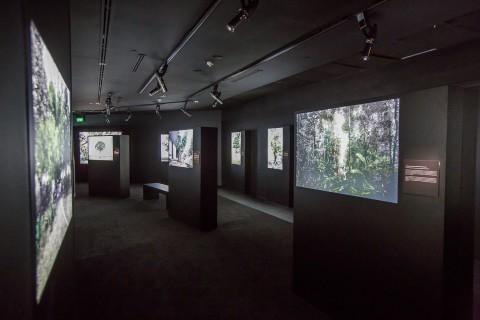 Robert Zhao Renhui and TeamLab: Glass Rotunda at National Museum of Singapore | ArtAsiaPacific